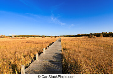 footbridge across the wetland at autumn