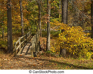 Footbridge in Woods - A wooden footbridge during peak Fall...