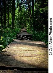 footbridge madeira