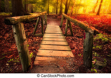 Footbridge path through woods in magical light