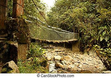 Footbridge in Cocora Valley trekking, Colombian Andes.