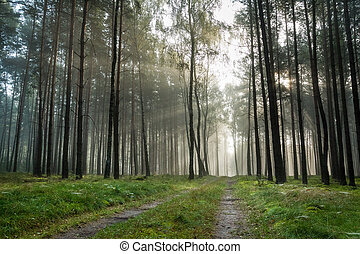 Foothpath in foggy forest at sunrise