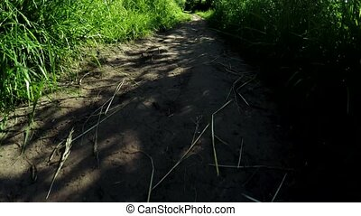 Footpath among tall grass - In backlight sun path among tall...