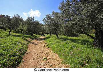 Footpath among the blossoming spring nature. The north of...