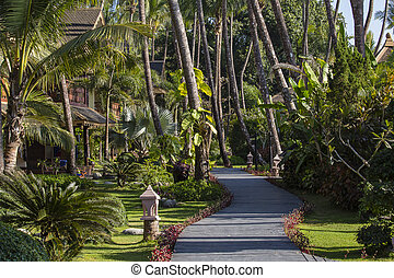Footpath and palm tree in tropical garden. Island Koh Samui, Thailand