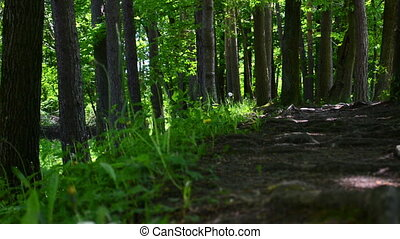 Footpath in a dark forest