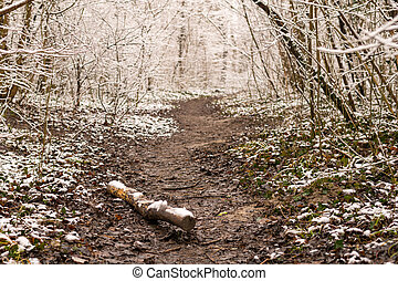 Footpath in a forest in winter with snow