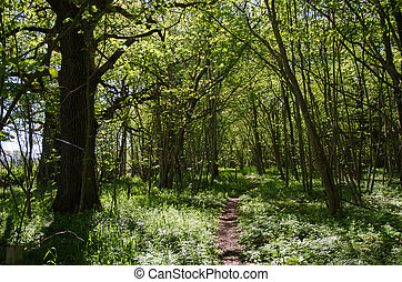 Footpath in a green forest