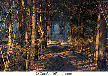 footpath in a mistic forest