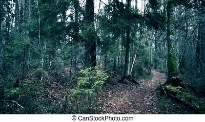 Footpath in a pine forest in autumn