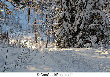 Footpath in a snowy forest on a sunny winter day.