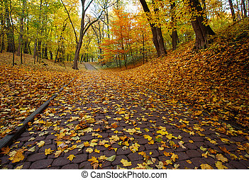 Footpath in autumn city park with yellow fallen leaves