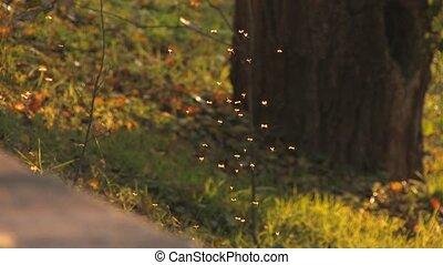Footpath in autumn sunlight
