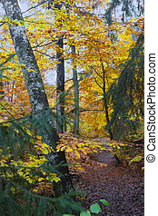 Footpath in colorful autumn forest
