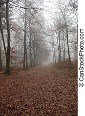 Footpath in fall forest