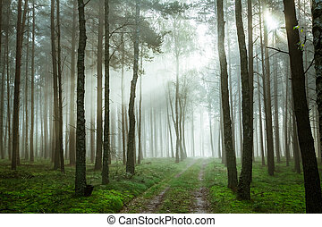 Footpath in foggy forest at sunrise