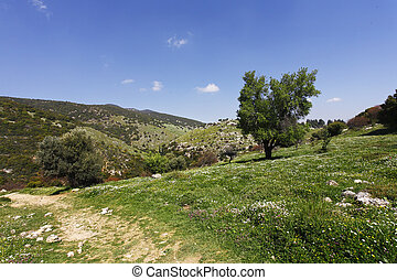 Footpath in low mountains. The north of Israel, mountain...