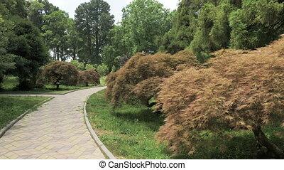 Footpath in one of the biggest botanical park - Batumi, Georgia