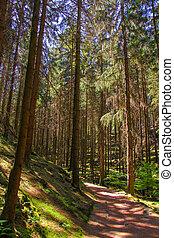 Footpath in summer green forest, Czech Republic