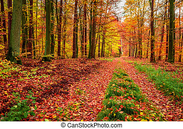 Footpath in sunny forest in the autumn, Poland