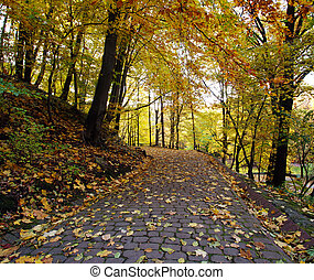 Footpath in the autumn city park with yellow fallen leaves