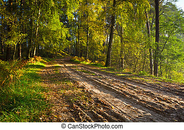 Footpath in the forest at autumn