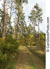 Footpath in the forest by fall season