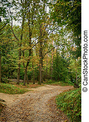 Footpath in the forest.