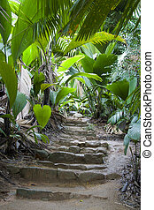 Footpath in the jungle