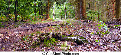 Footpath in the mixed forest in a sunny day, summer, ...