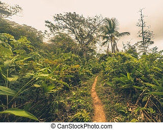 footpath inside jungle / dirt trail in forest landscape