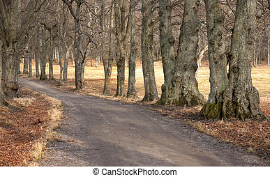 Footpath lined with old trees