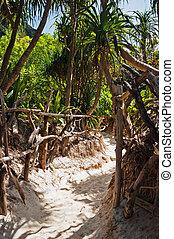 footpath on the island of phi phi leh Krabi, Thailand