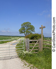 footpath sign and ash mature tree in summertime