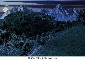 footpath through forest on hillside at night