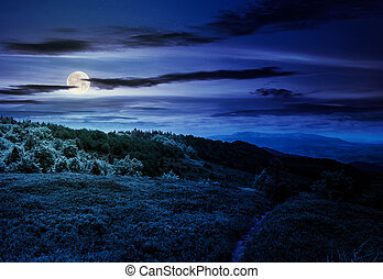 footpath through grassy mountain meadow at night in full...