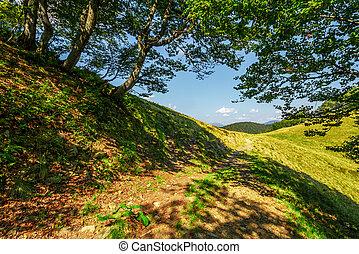 footpath through the forest on mountain ridge. fine summer...