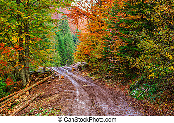 Footpath winding through colorful forest in Transylvania-...