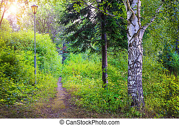 footpath with a lamp in the beautiful wood