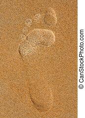 footprint in the sand on the beach