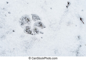 Footprint of a dog in the snow.