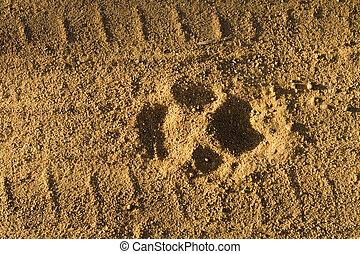 Footprint of dog