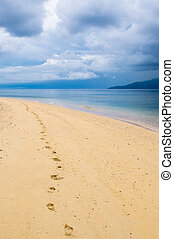 footprints in a tropical beach