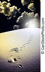 Footprints in desert White Sands New Mexico