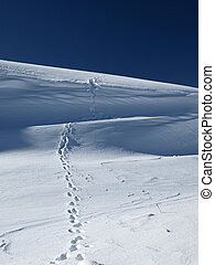 footprints in the snow