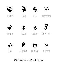Footprints of animals
