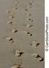 Footprints - Two sets of footprints through the sand.