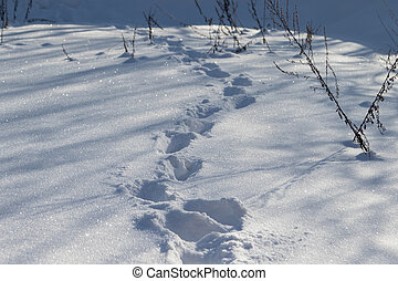 Footsteps, human tracks in the snow