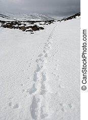 Footsteps in snow, Cairngorms, Scottish Highlands