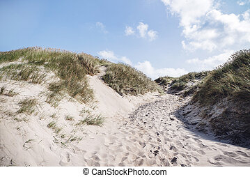 Footsteps in the sand on a beach with lyme grass in the...